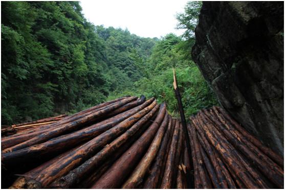 原生故事|沈力丨捧一捧泥土,在森林的最深处,种一个梦