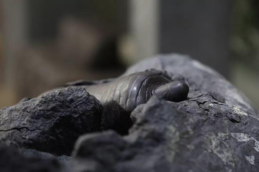 原生故事|满屋都是石头的气息︱《秘境宝物》制作记(二)